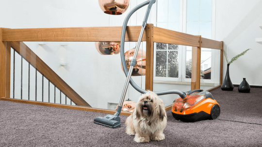 Cycloon Hybrid Family & Pets