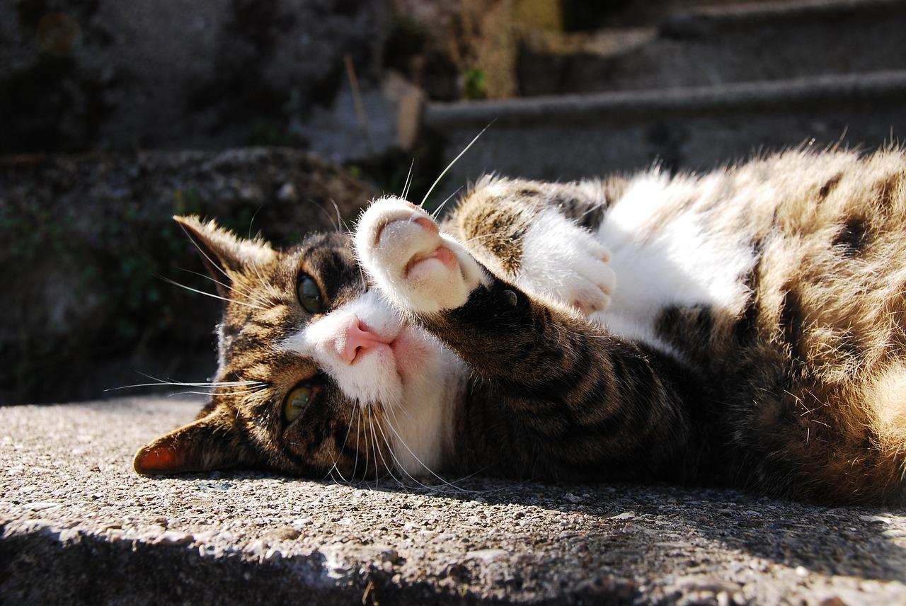 7 tips om je kat af te koelen in de zomer