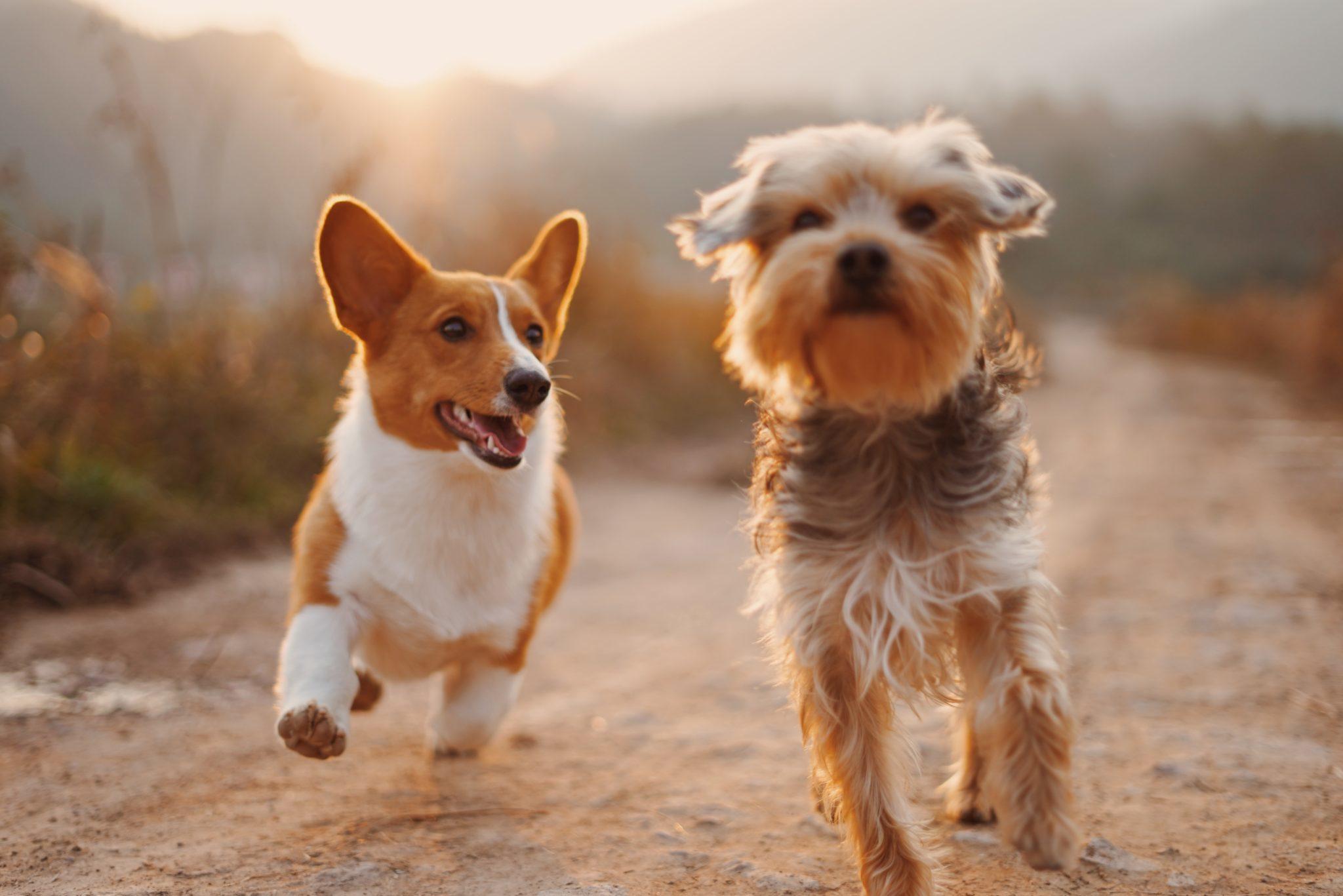 Het is zomer: 4 activiteiten voor jou en je hond!