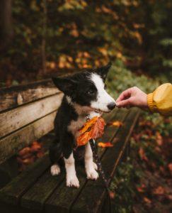 Herfsttips voor jou en je hond thomas