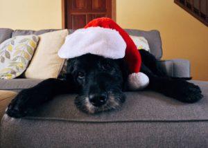 tips voor onze huisdieren in december
