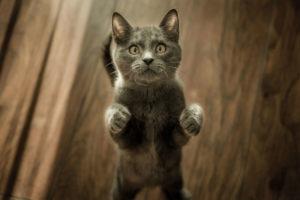 wat-bedoelt-je-kat